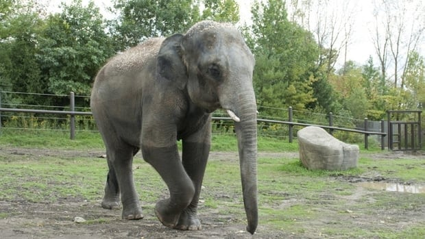 Toronto Zoo elephant keepers were not consulted about where to send the elephants and are now petitioning to have their say before the big move.