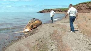 pe-mi-westcape-whale