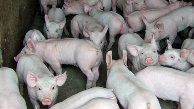 World pork prices could soon spike, a British group says.