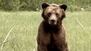 hi-bc-130905-grizzly-bear-hunting-4col