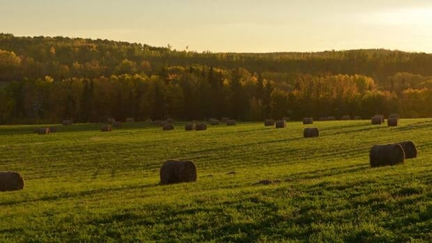 Local farmer Van McCordick says he will likely get only one cutting of hay this year, compared to his usual two or three.