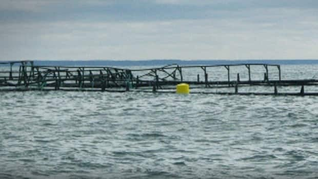 Residents in southwestern Nova Scotia say they're worried about storm damage to a local fish farm.