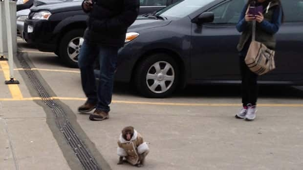 Darwin escaped from his owner's car in the Ikea parking lot.