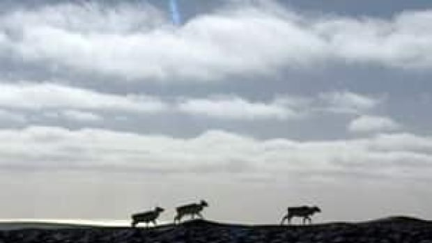 The Nunatsiavut government has asked its people to stop hunting caribou in order to preserve the population of the dwindling George River herd.
