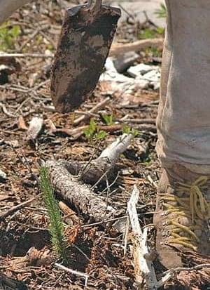 mi-tree-planting-300