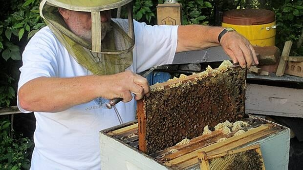 Les Simonffy inspects his bees' honey production. The bee population in Ontario is decreasing by as much as 35 per cent annually, experts say.