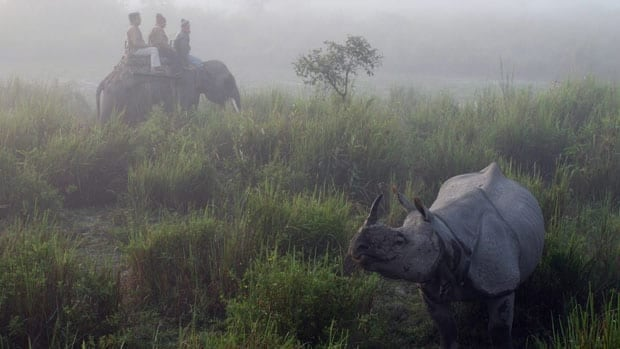 Tourists at the Kaziranga National Park take an early morning ride to view one-horned Indian rhinos in the mist in Assam's tea country in Kaziranga, India, December 3, 2012.