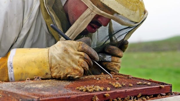 A group of beekeepers met Saturday to discuss the state of beekeeping in New Brunswick.