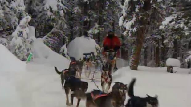 The 1,600 kilometre race from Whitehorse to Fairbanks, Alaska started on Feb. 2