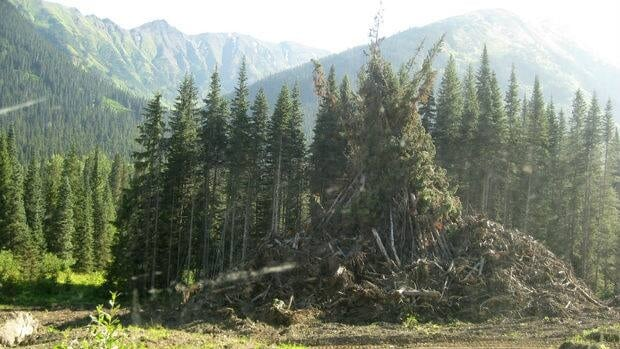 A slash pile on Highway 37, the Ningunsaw Pass, in northwest B.C.