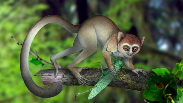 The primate, seen in this artistic reconstruction, was a mouse-sized, insect-eating animal that lived among the trees and was active during the day.
