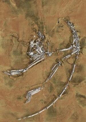 sm-250-archicebus-fossil-press_release_media1