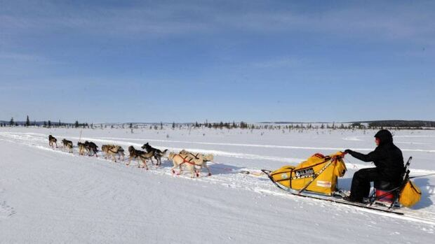 """Mitch Seavey drives his dog team towards Nome, Alaska, after leaving the White Mountain checkpoint, Tuesday, during the Iditarod Trail Sled Dog Race. """"This is for all of the gentlemen of a certain age,"""" Seavey said after crossing the finish line."""