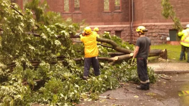 This tree, which fell on Somerset Street West Tuesday morning, was the top priority for forestry workers who claim they can't keep up with demand across Ottawa.