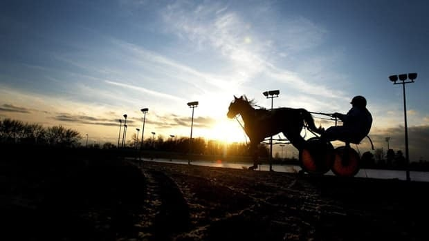 A standardbred racing driver is silhouetted while practicing at Flamboro Downs. A local vet says more horses are being killed since the government cancelled its Slots at Racetracks program. (Nathan Denette/The Canadian Press)