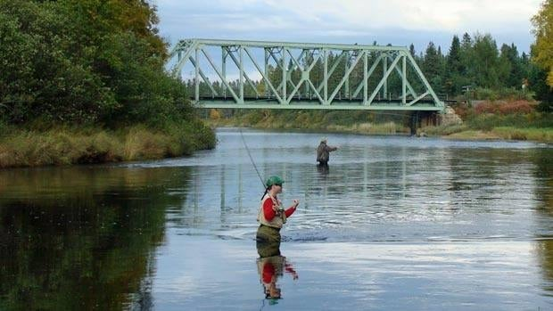 Anglers were required to release all salmon caught on New Brunswick rivers in 2015.