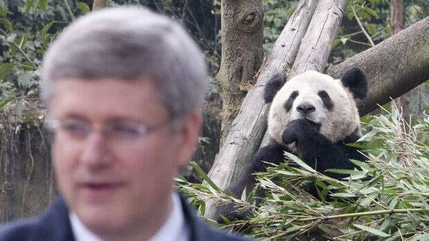 Panda Er Shun eats bamboo while he watches Canadian Prime Minister Stephen Harper speak during a ceremony at the Chongqing Zoo in Chongqing, China. Er Shun is one of two pandas who will live for five years at the Toronto Zoo.