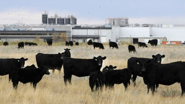JBS says a deal has not yet been finalized, but the company is pursuing the regulatory approvals required for it to assume ownership of the XL Foods meat plant in Brooks, Alta.