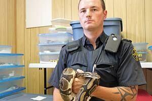 ii-pythons-james