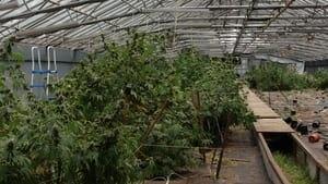 hi-greenhouse-852-4col
