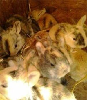 ns-baby-bunnies-220