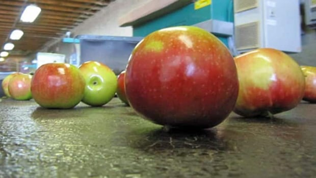 Ottawa and Ontario together in January announced $2 million in relief to apple growers who suffered crop loss last year.