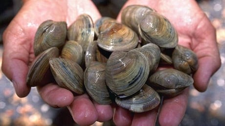 Clams from area closed due to fecal contamination believed sold in Victoria's Chinatown