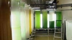 ns-algae-room_220x124_1