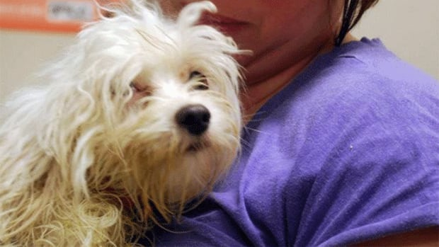 This dog was one of the numerous animals seized by the New Brunswick SPCA on Monday.