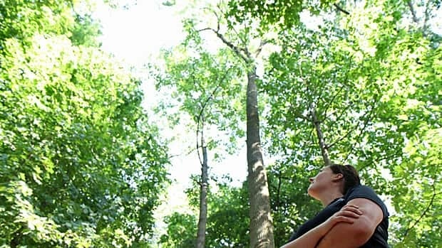 Lindsay Burtenshaw, terrestrial ecologist with the Royal Botanical Gardens, looks up at a tree injected against the emerald ash borer in this CBC Hamilton file photo. Hamilton is celebrating Arbor Week. (Samantha Craggs/CBC)