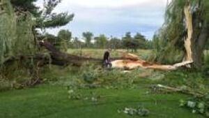 si-ott-pineview-golf-tree-2
