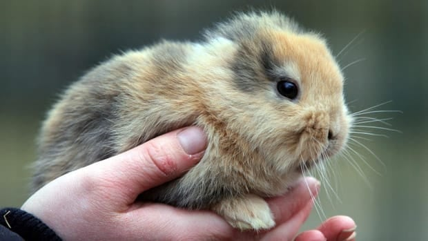 A German zoo is mourning the death of Til, a bunny born without ears that died after a TV cameraman accidentally stepped on him.