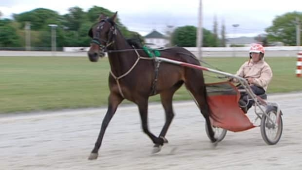 Danny Romo has been harness racing for 41 years.