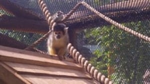 nb-squirrel-monkey-220