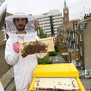 sm-300-urban-beekeeping-london-7123987