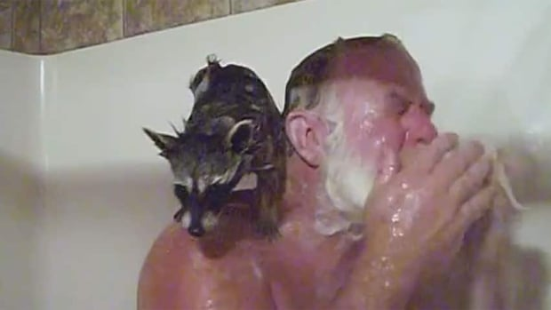 Rebekah the raccoon hopped in the shower with Mark Brown.