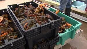pei-lobster_852x479_1-4col