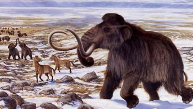 Woolly mammoths are considered a prime candidate for de-extinction. Last year, researchers at McMaster University announced they had nearly sequenced the entire Wolly mammoth genome.