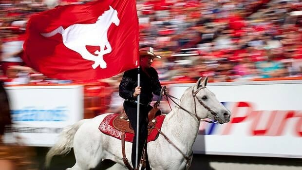 Calgary Stampeders' touchdown horse Quick Six and rider Karyn Drake are seen here celebrating a Stampeders touchdown in Calgary. The Stamps are lobbying the CFL to let the duo head to Toronto for the 100th Grey Cup.