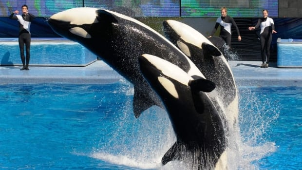 SeaWorld says negative media attention has led to disappointing sales and attendance in the second quarter