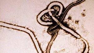 hi-ebola-virus
