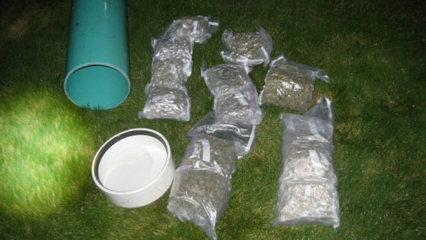 U.S. border officials say a scuba driver wedged about 3.6 kg of marijuana into a watertight pipe and tried to swim it across the border.