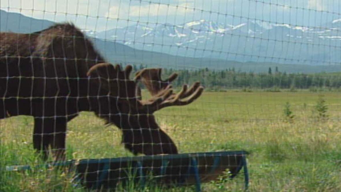 Yukon Wildlife Preserve Seeks Zoo Accreditation North