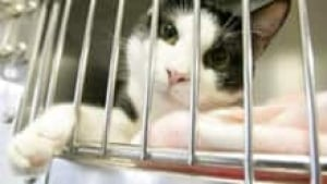 Cat Disease Outbreak