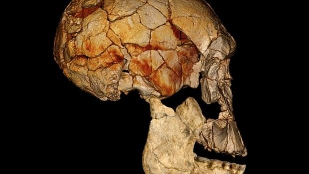 The famous Leakey family of paleontologists says newly found fossils from Kenya confirm their controversial theory that the human family tree may have sprouted some long-lost branches going back nearly 2 million years. The computer-enhanced image above shows a lower jaw and the cranium, based on a computed tomography scan of the KNM-ER 1470 cranium, discovered in 1972, combined with the newly found fossils of the lower jaw, known as KNM-ER 60000.