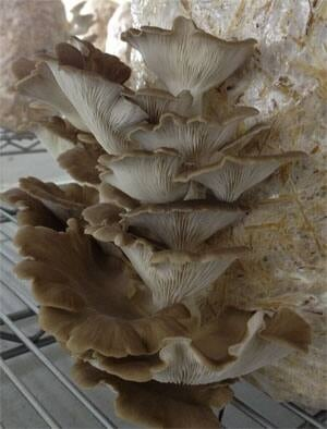 mi-mushrooms-2