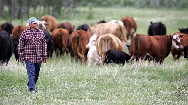 Beef from 19 EU countries has been accepted for import to Canada, according to the European Commission. (Canadian Press)