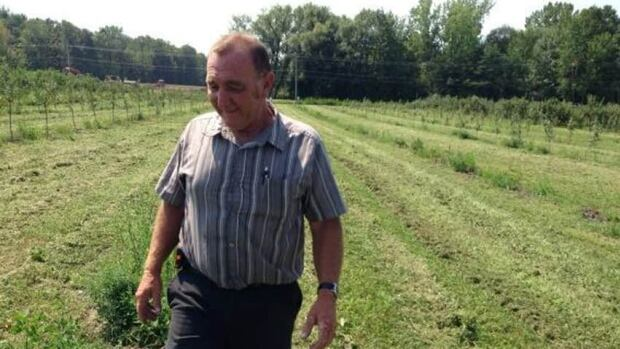 Thieves made off with 140 young apple trees from Jeannot Alix's orchard in Rougemont, Que.