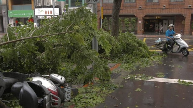 A motorist rides past a tree and a motorcycle felled by Typhoon Saola in Taipei. Taiwanese markets were closed on Thursday due to the typhoon, as the stock exchange, offices and businesses in the capital were ordered to close.