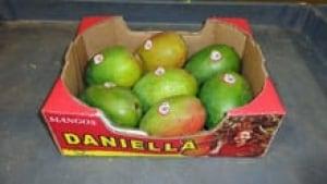 si-mango-daniella-220-cp